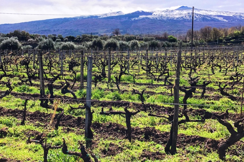Etna Wine Region Vineyards in lava stones